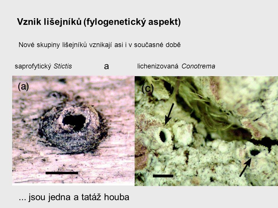 Vznik lišejníků (fylogenetický aspekt)