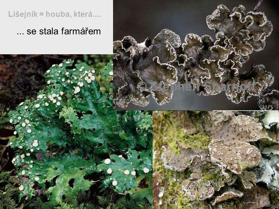 Lišejník = houba, která.... ... se stala farmářem