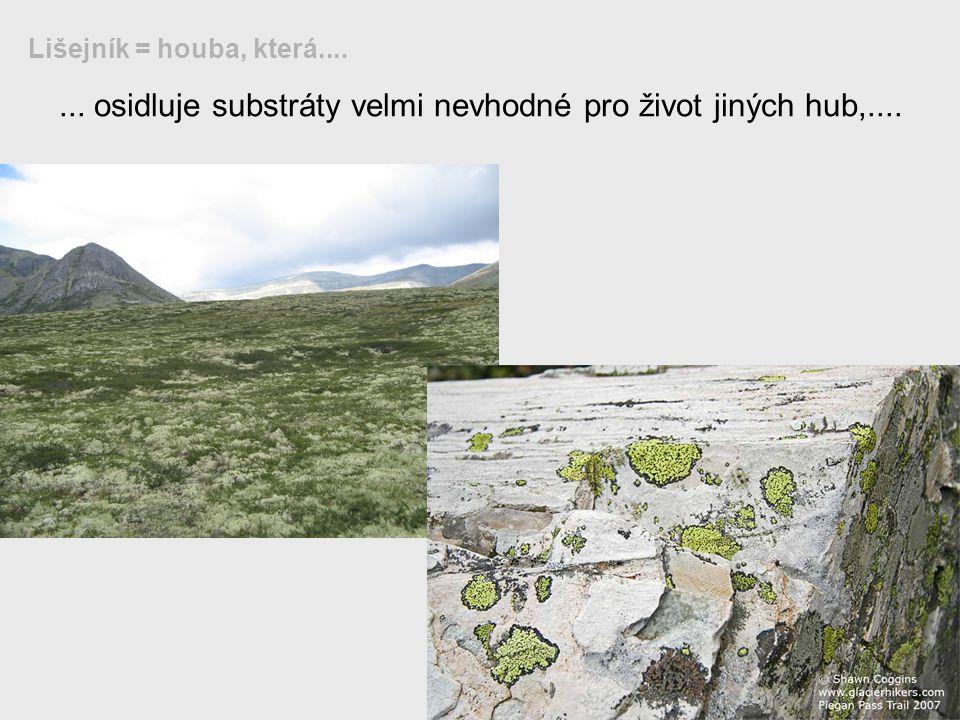 ... osidluje substráty velmi nevhodné pro život jiných hub,....