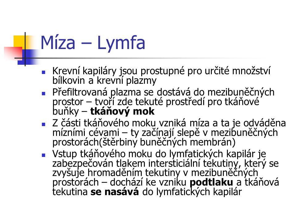 Míza – Lymfa Krevní kapiláry jsou prostupné pro určité množství bílkovin a krevní plazmy.