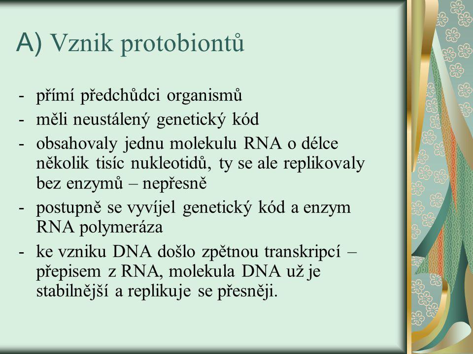 A) Vznik protobiontů přímí předchůdci organismů