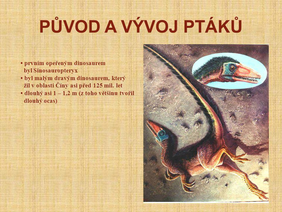 PŮVOD A VÝVOJ PTÁKŮ • prvním opeřeným dinosaurem byl Sinosauropteryx
