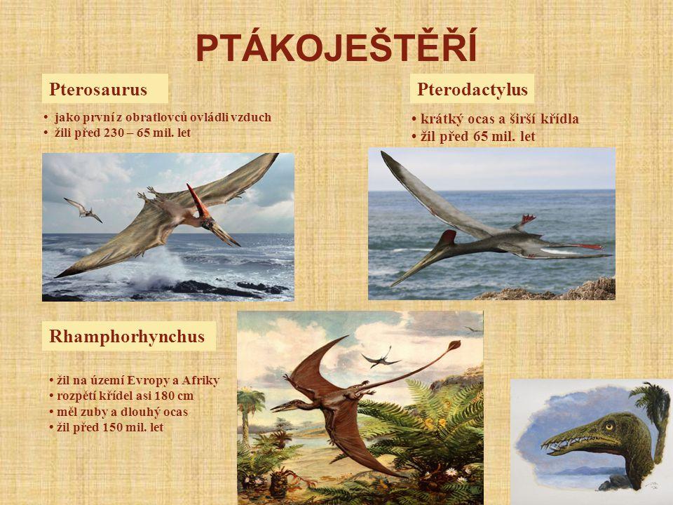 PTÁKOJEŠTĚŘÍ Pterosaurus Pterodactylus Rhamphorhynchus