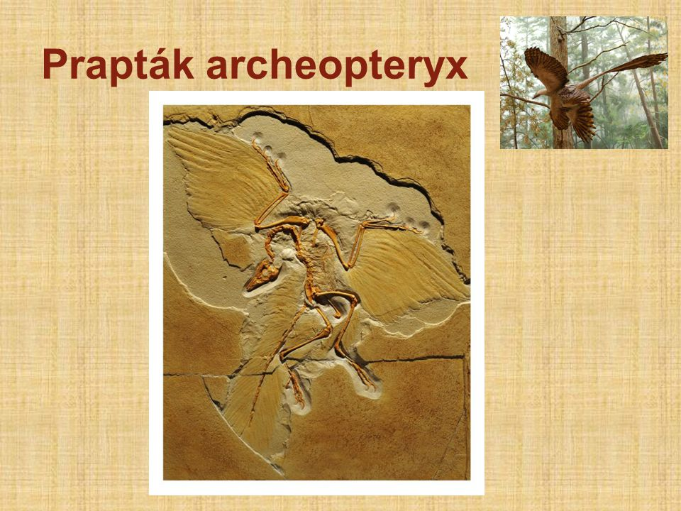 Prapták archeopteryx