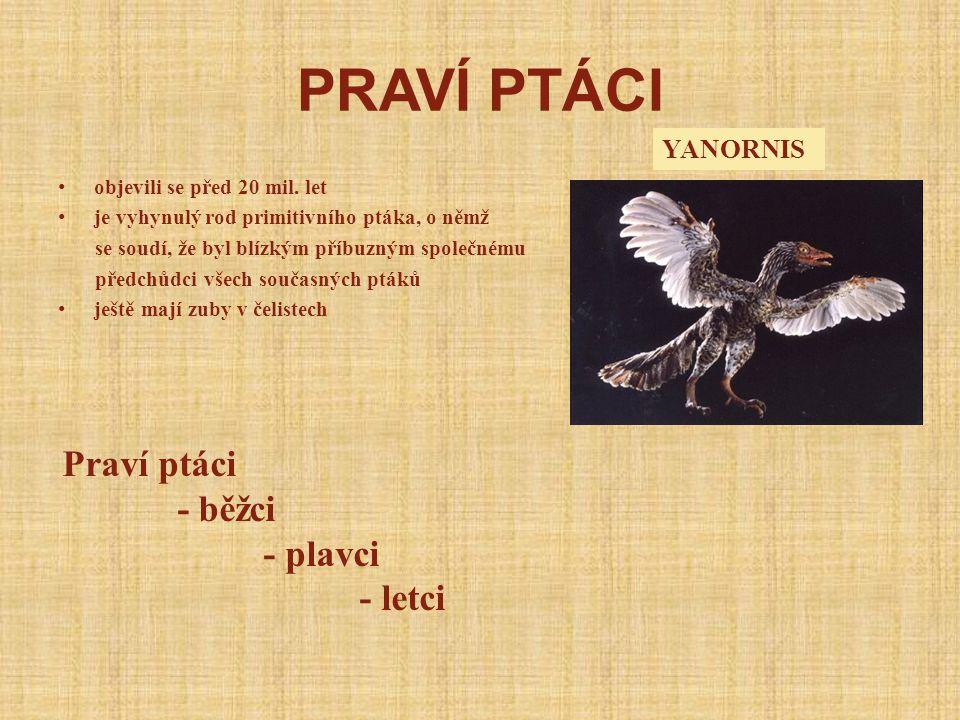 PRAVÍ PTÁCI Praví ptáci - běžci - plavci - letci YANORNIS
