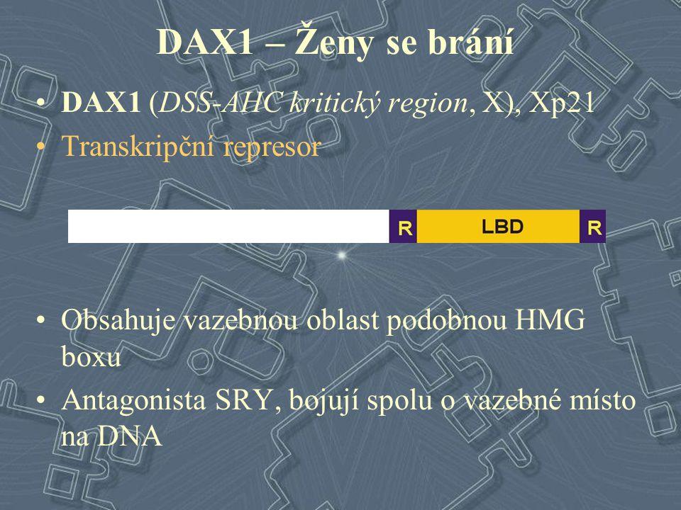 DAX1 – Ženy se brání DAX1 (DSS-AHC kritický region, X), Xp21