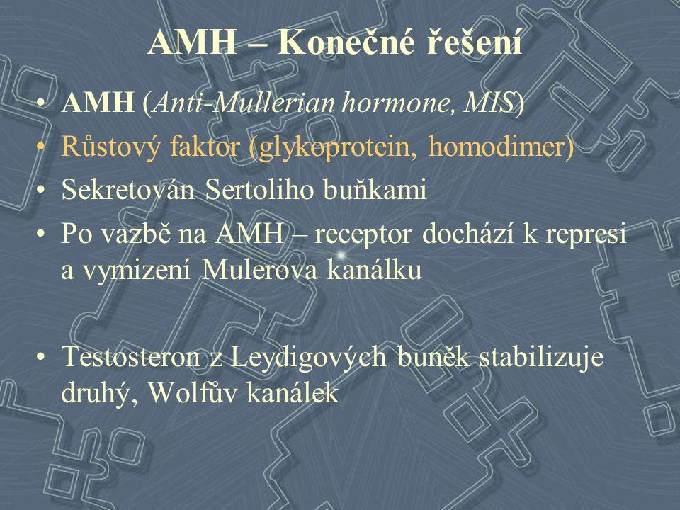 AMH – Konečné řešení AMH (Anti-Mullerian hormone, MIS)