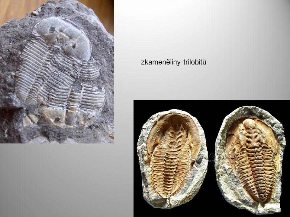 zkameněliny trilobitů