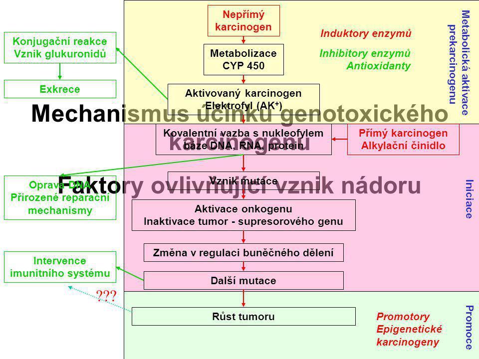 Mechanismus účinku genotoxického karcinogenu