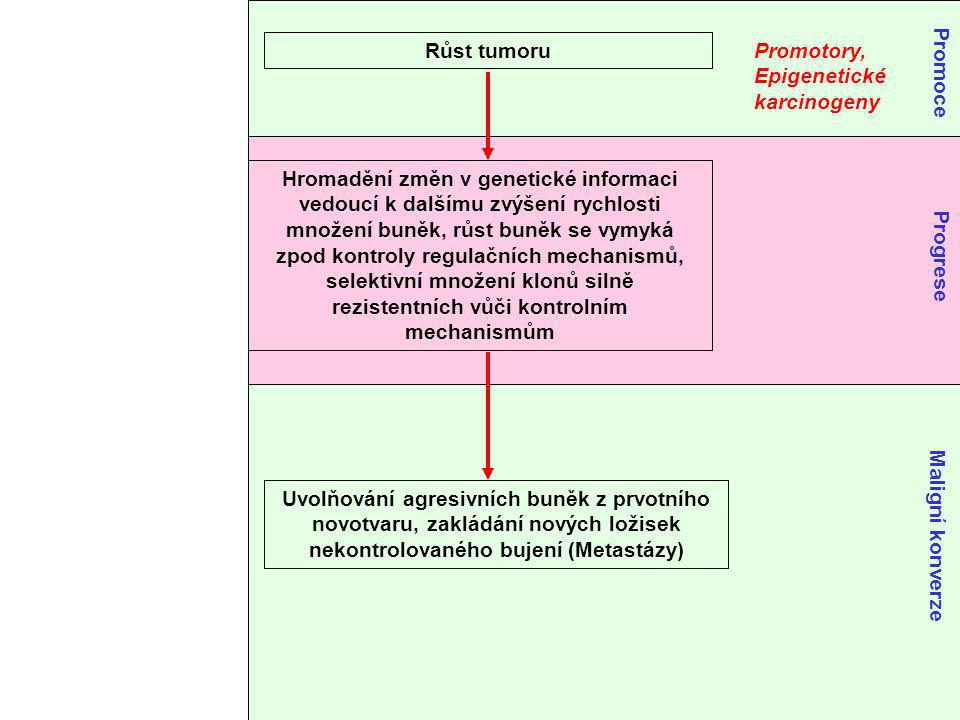 Růst tumoru Promotory, Epigenetické. karcinogeny. Promoce.