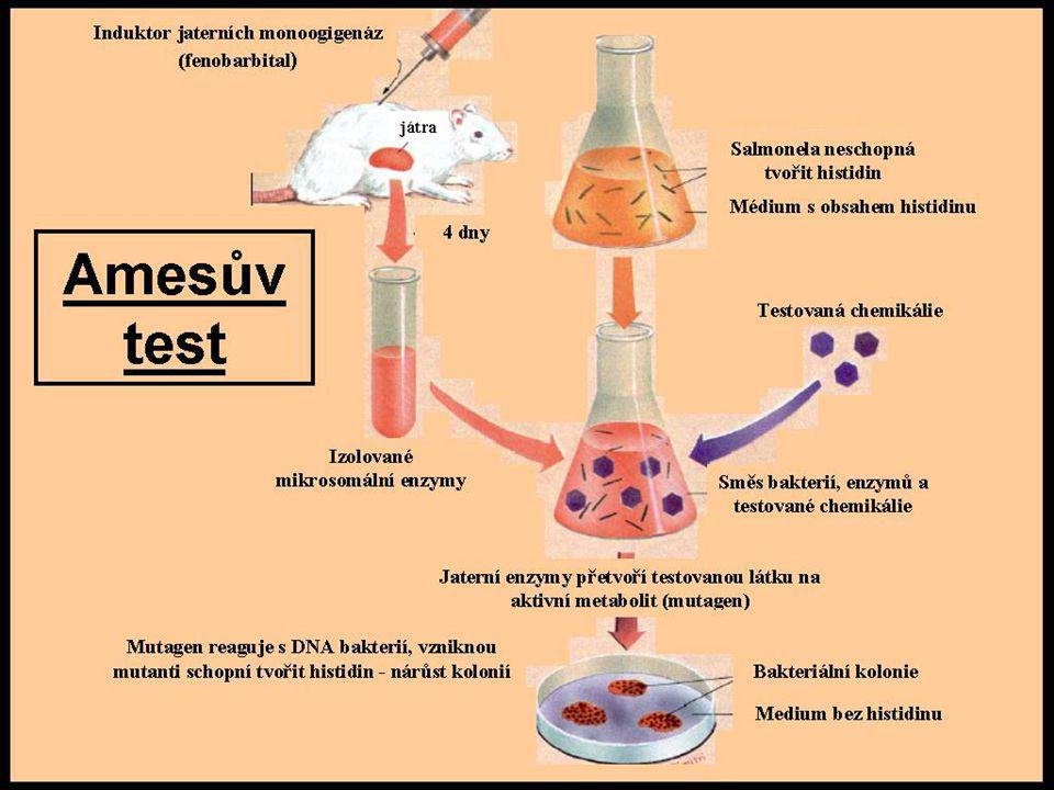 Krátkodobé (screeningové) testy mutagenity