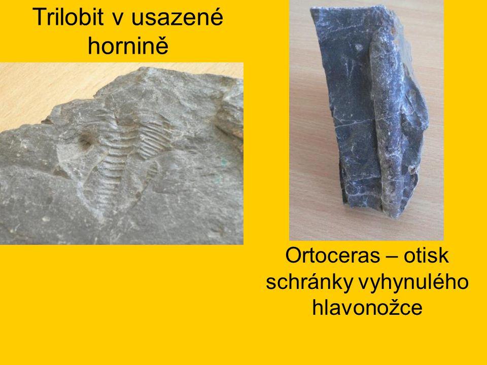 Trilobit v usazené hornině