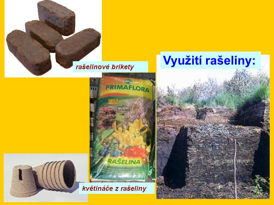 rašelinové brikety Využití rašeliny: květináče z rašeliny