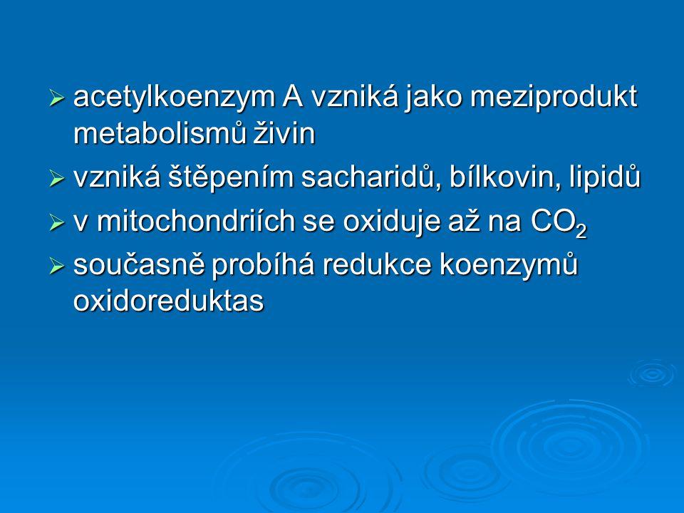 acetylkoenzym A vzniká jako meziprodukt metabolismů živin