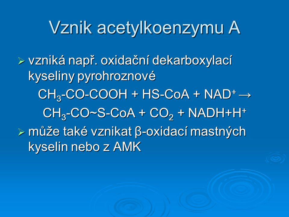 Vznik acetylkoenzymu A