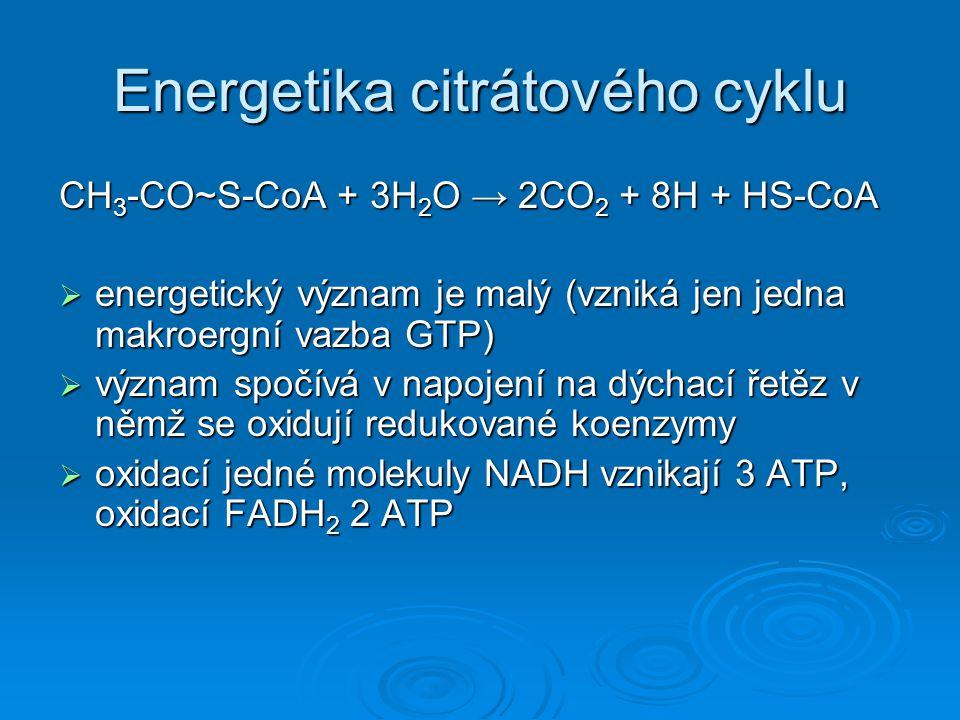 Energetika citrátového cyklu