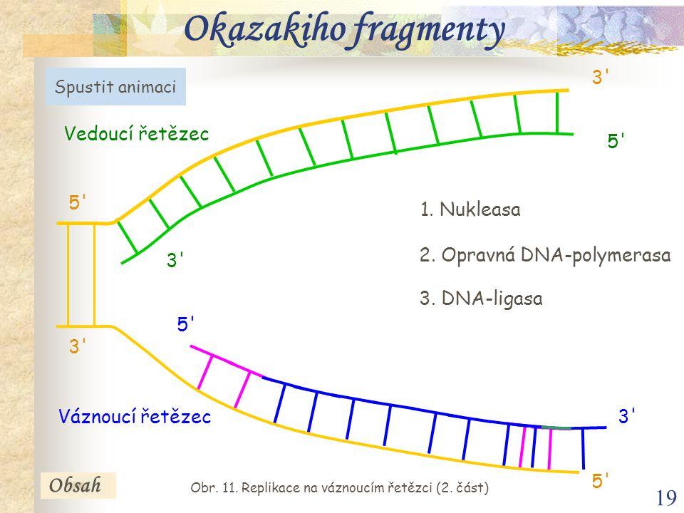 Obr. 11. Replikace na váznoucím řetězci (2. část)