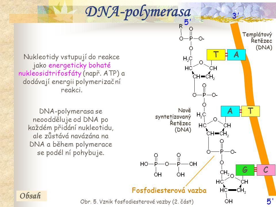 Obr. 5. Vznik fosfodiesterové vazby (2. část)