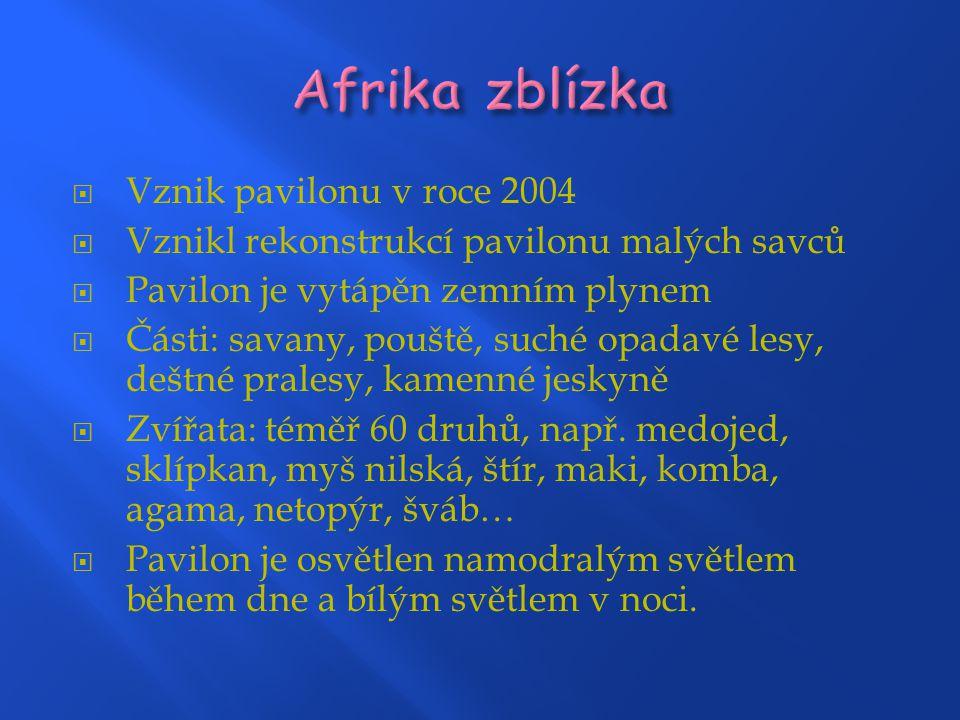 Afrika zblízka Vznik pavilonu v roce 2004