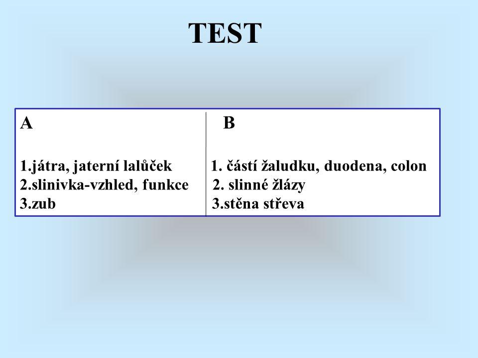 TEST A B 1.játra, jaterní lalůček 1. částí žaludku, duodena, colon