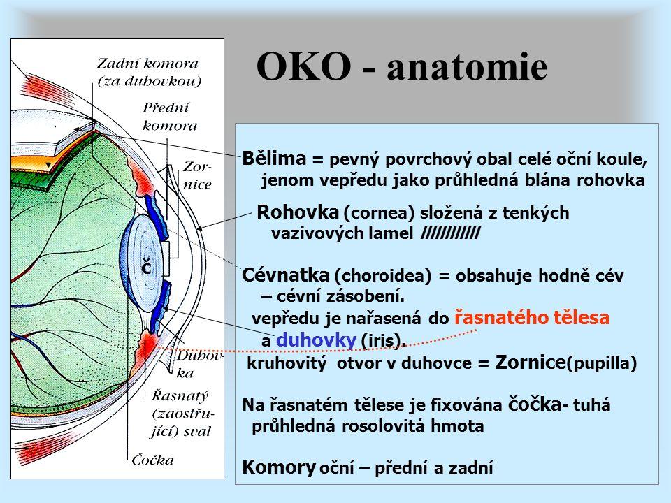 OKO - anatomie Bělima = pevný povrchový obal celé oční koule,