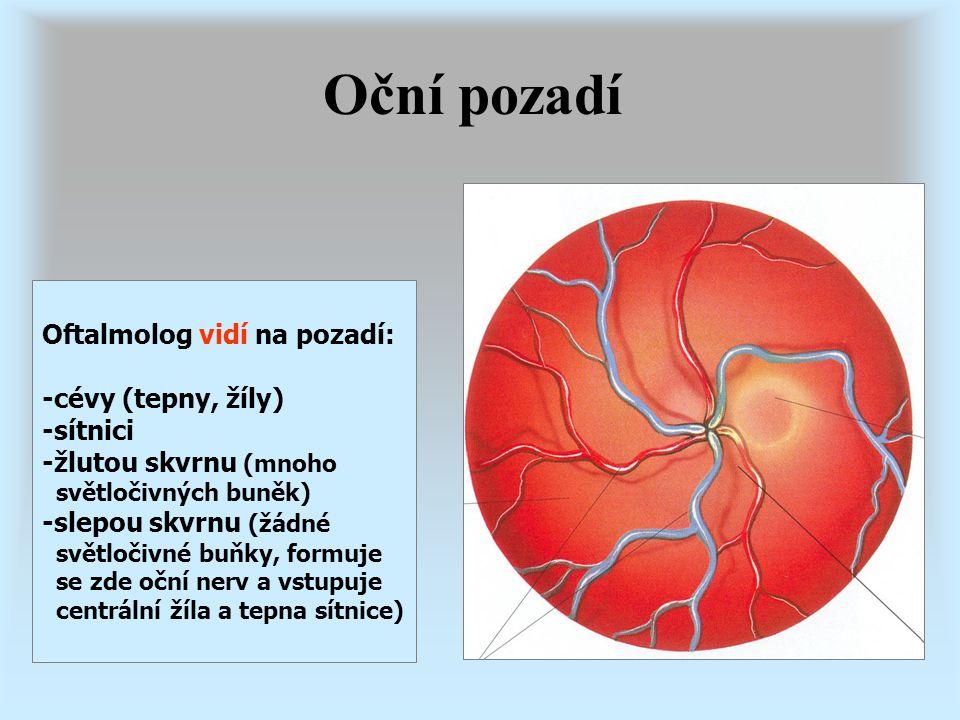Oční pozadí Oftalmolog vidí na pozadí: -cévy (tepny, žíly) -sítnici