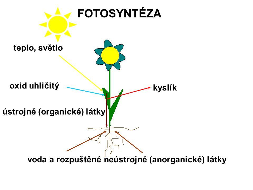 FOTOSYNTÉZA teplo, světlo oxid uhličitý kyslík
