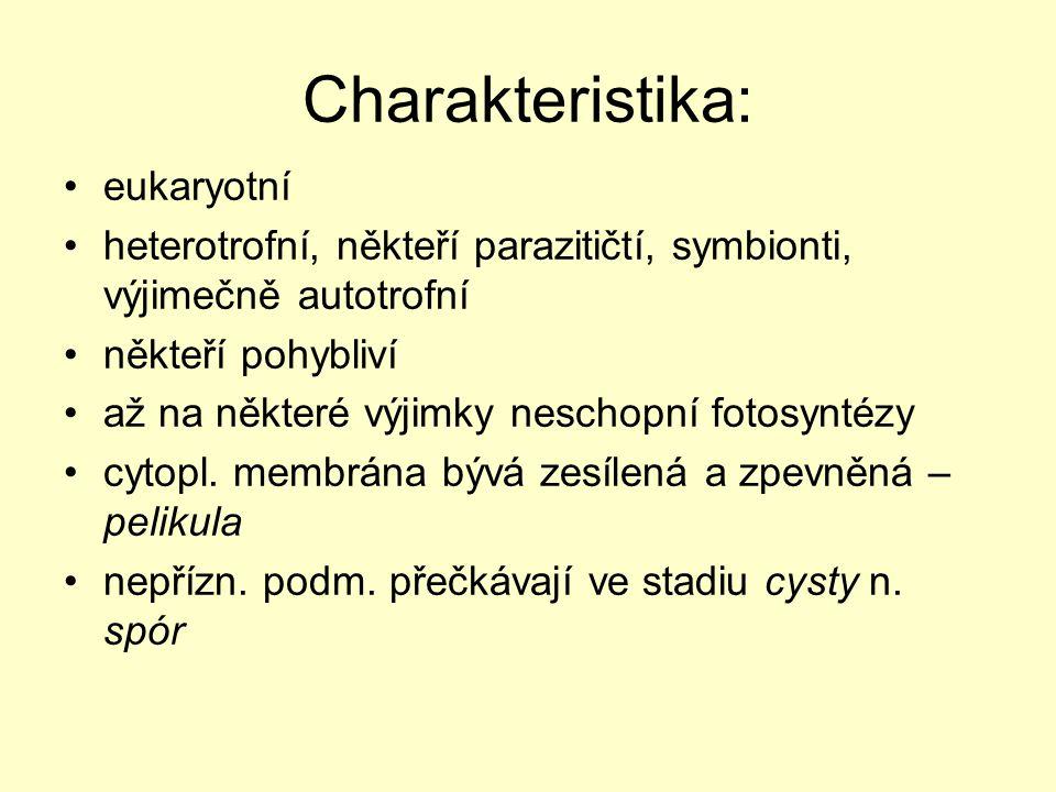Charakteristika: eukaryotní