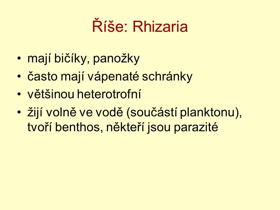 Říše: Rhizaria mají bičíky, panožky často mají vápenaté schránky