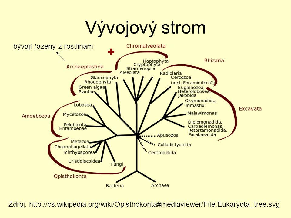 Vývojový strom + bývají řazeny z rostlinám