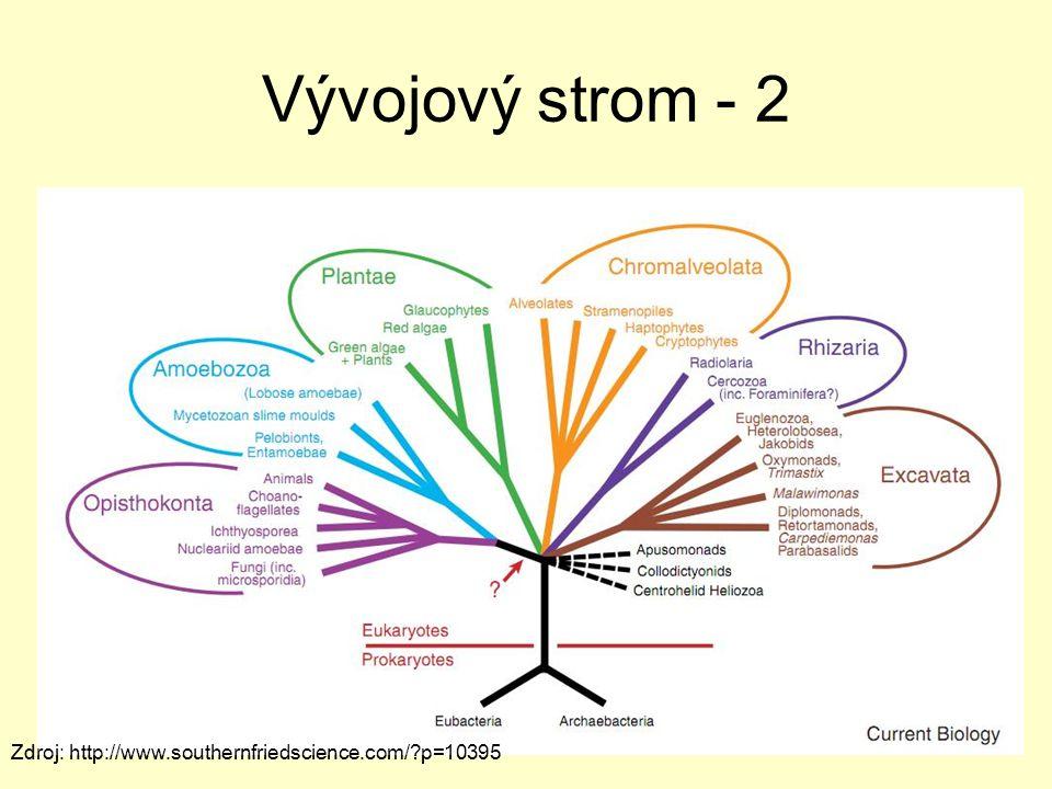 Vývojový strom - 2 Zdroj: http://www.southernfriedscience.com/ p=10395