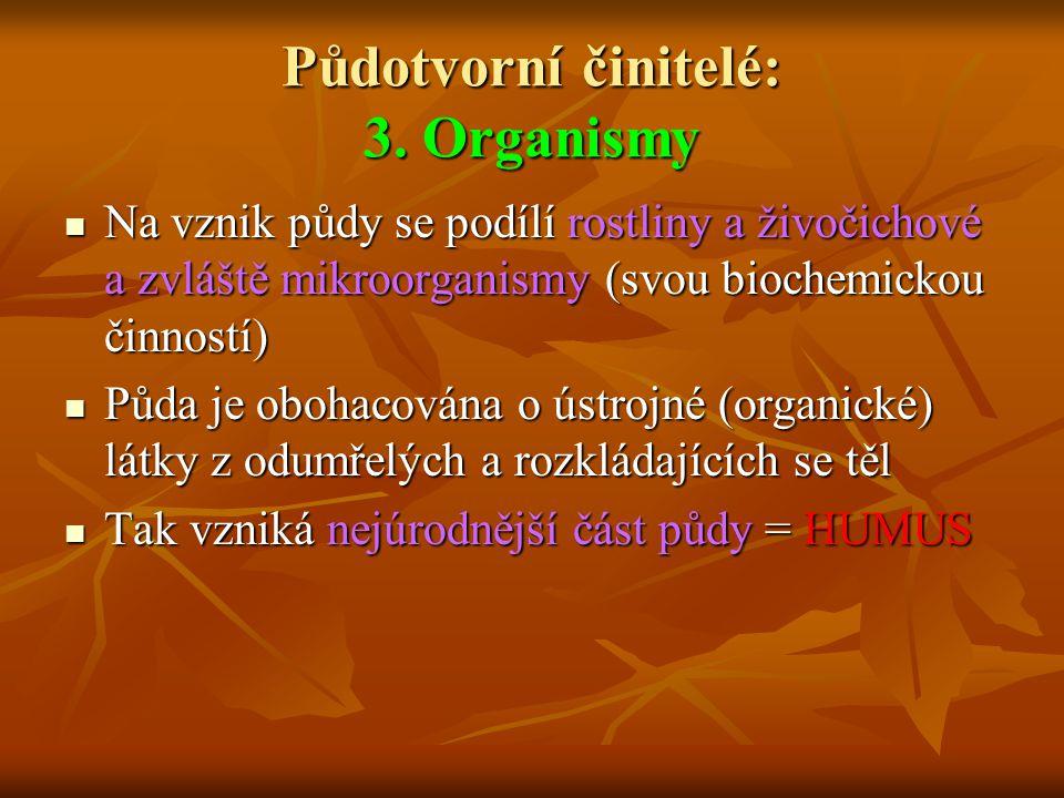 Půdotvorní činitelé: 3. Organismy