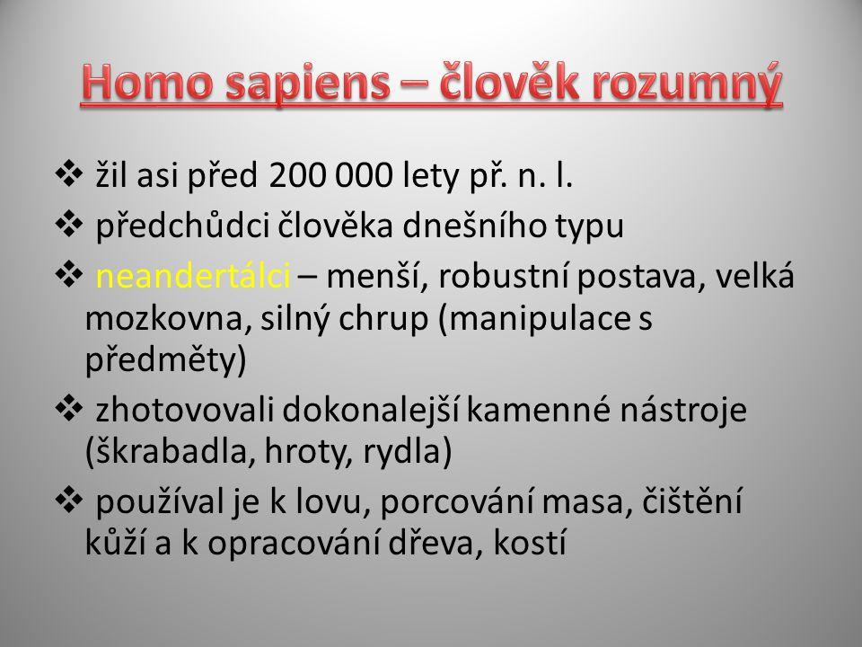 Homo sapiens – člověk rozumný