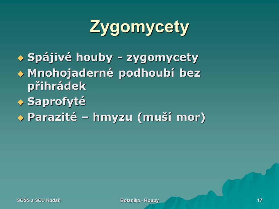 Zygomycety Spájivé houby - zygomycety