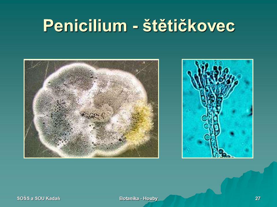 Penicilium - štětičkovec