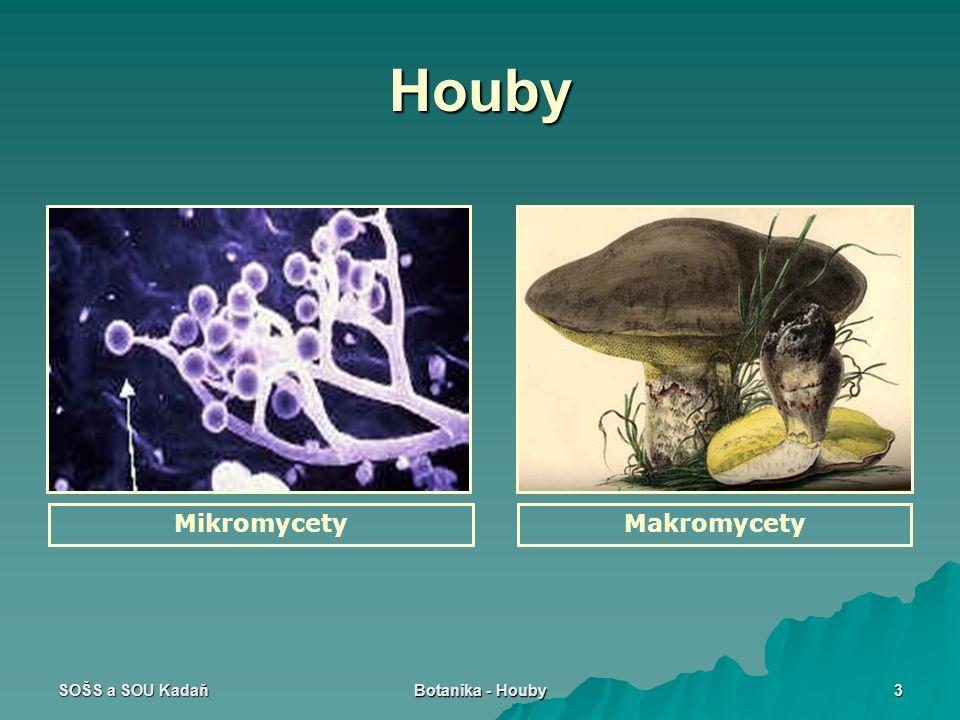 Houby Mikromycety Makromycety SOŠS a SOU Kadaň Botanika - Houby