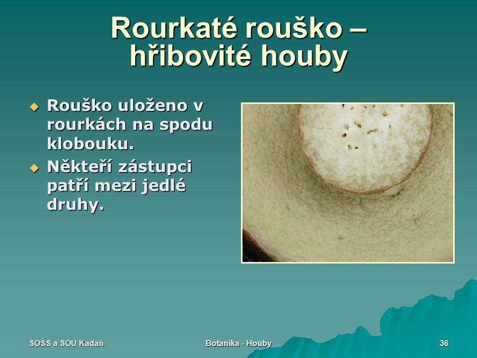 Rourkaté rouško – hřibovité houby