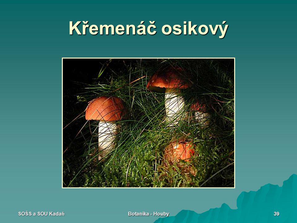 Křemenáč osikový SOŠS a SOU Kadaň Botanika - Houby