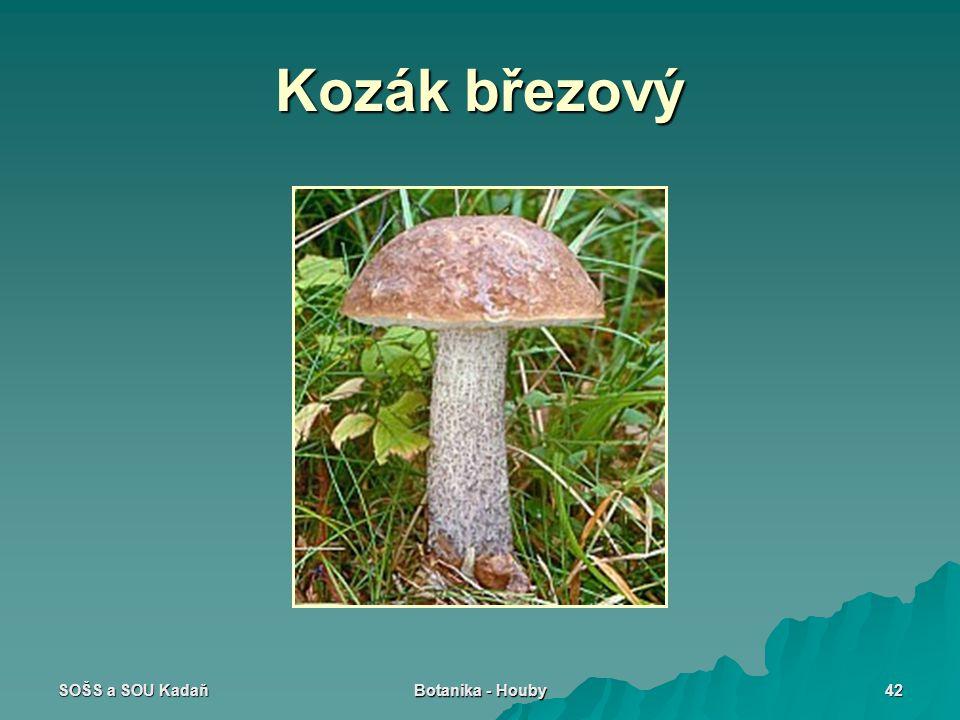 Kozák březový SOŠS a SOU Kadaň Botanika - Houby