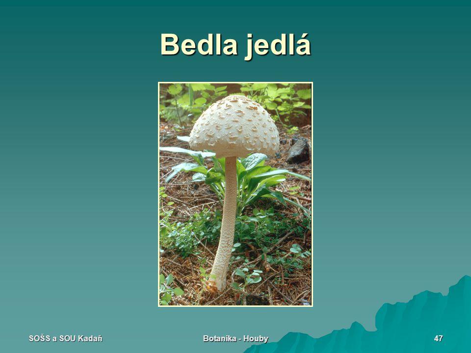 Bedla jedlá SOŠS a SOU Kadaň Botanika - Houby