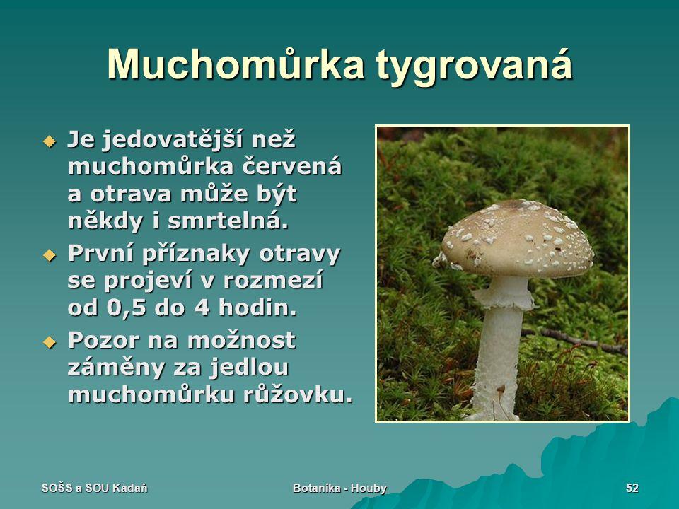 Muchomůrka tygrovaná Je jedovatější než muchomůrka červená a otrava může být někdy i smrtelná.