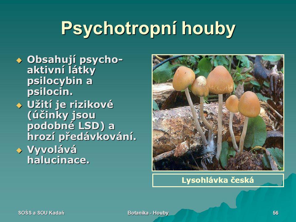 Psychotropní houby Obsahují psycho-aktivní látky psilocybin a psilocin. Užití je rizikové (účinky jsou podobné LSD) a hrozí předávkování.