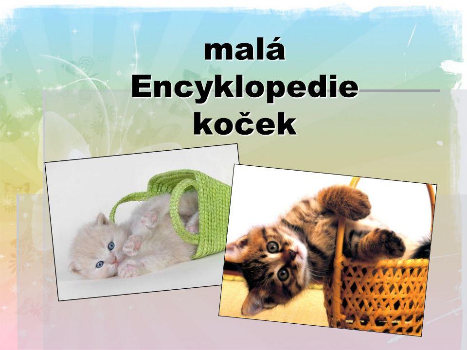 malá Encyklopedie koček