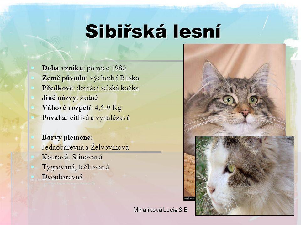 Sibiřská lesní Doba vzniku: po roce 1980 Země původu: východní Rusko