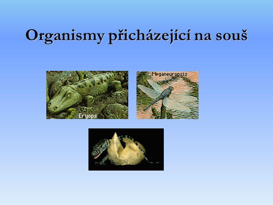 Organismy přicházející na souš