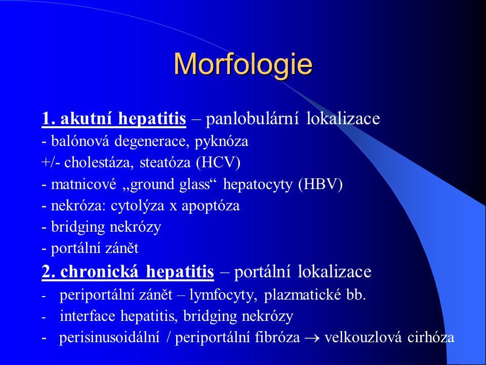Morfologie 1. akutní hepatitis – panlobulární lokalizace