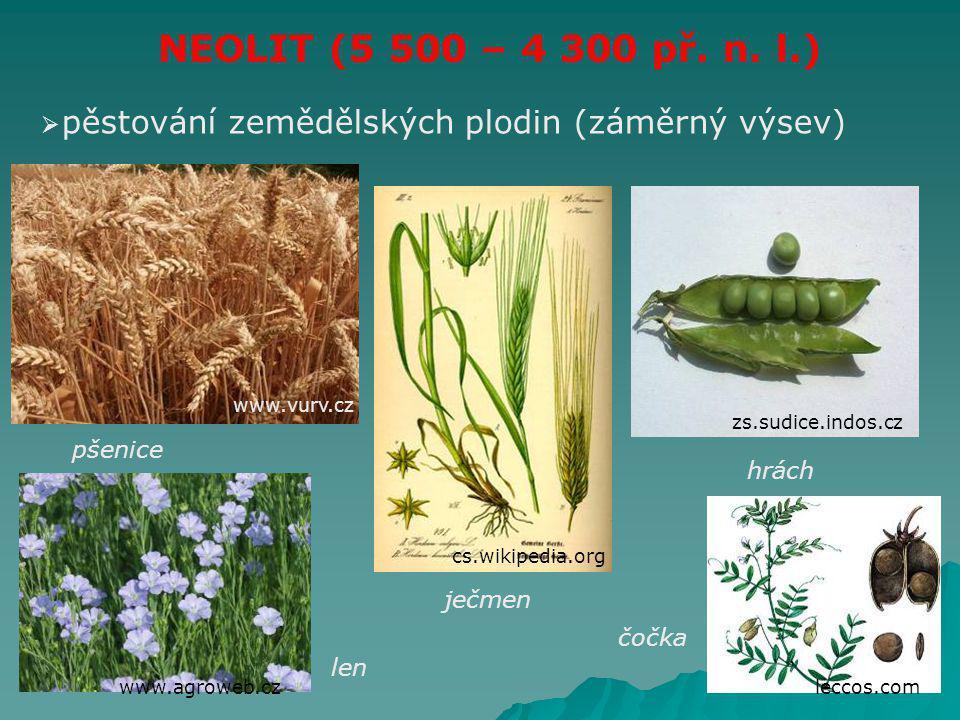 NEOLIT (5 500 – 4 300 př. n. l.) pěstování zemědělských plodin (záměrný výsev) www.vurv.cz. zs.sudice.indos.cz.