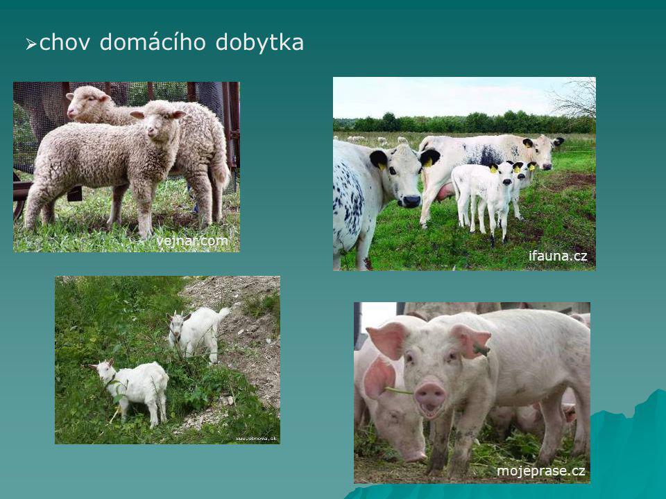 chov domácího dobytka vejnar.com ifauna.cz mojeprase.cz
