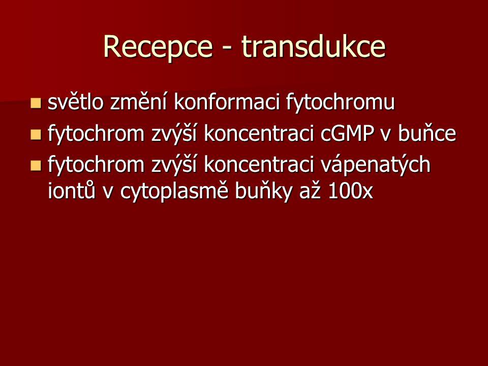 Recepce - transdukce světlo změní konformaci fytochromu