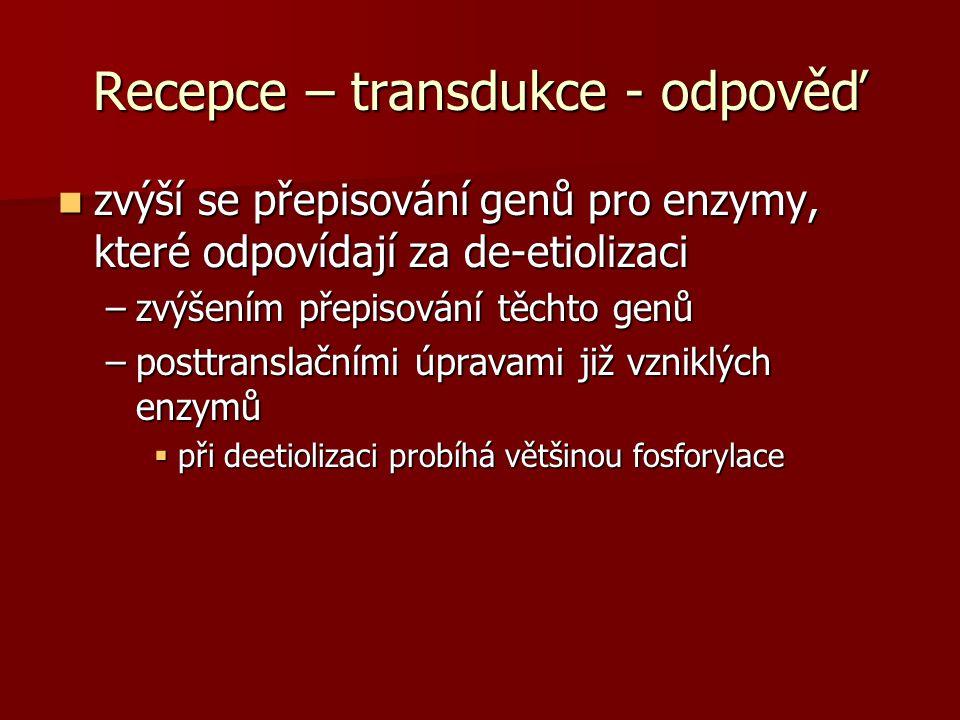 Recepce – transdukce - odpověď